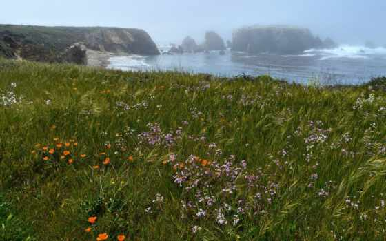 природа, море, class, div, цветы, берег, туман, трава, скалы,