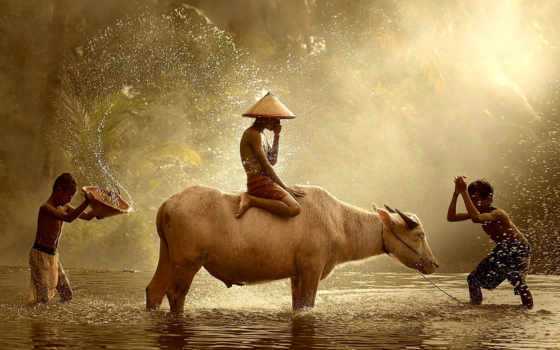 children, брызги, water, индонезийский, game, zhivotnye, картинка, cow, jawa, река, java,