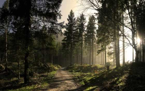 природа, коллекция, лес, дорога, лесу, яndex,
