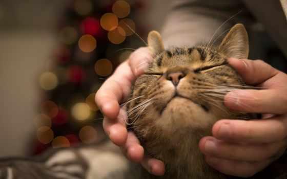 руки, котенок, resolutions,