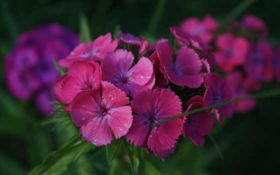 flowers, macro, was