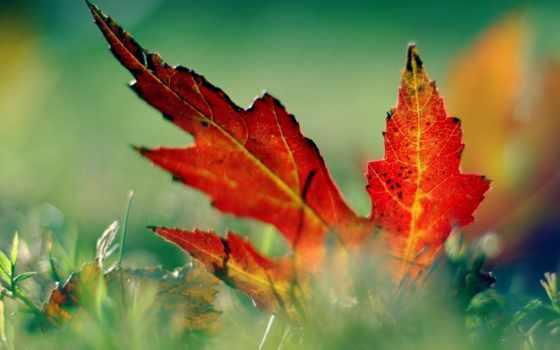 desktop, leaf, free