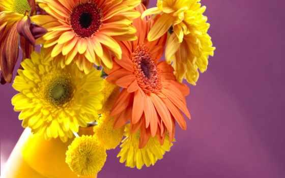 цветы, разрешениях, разных
