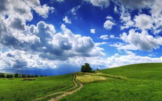 трава, облака, дерево