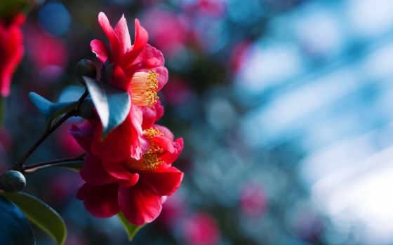 цветы, качества, full
