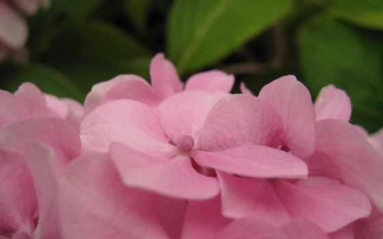 цветы, pokój, między,