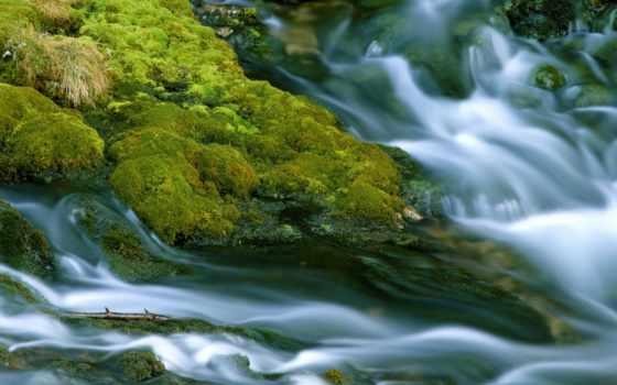 мох, камнях, ручья, wet, риф, остров, папуа, свой, guinea, начало, новая,