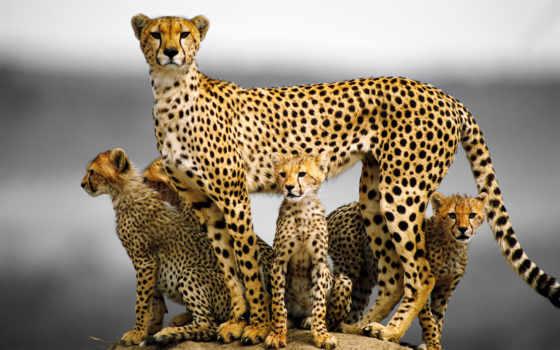 гепард, кот, дома, дешевые, aliexpress, товар, искусства, сада, но, питания, камень,