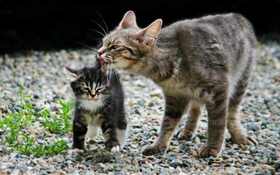 кот, кошками, котенок, котята, лежит, продолжительность, кошки, views, youtube,