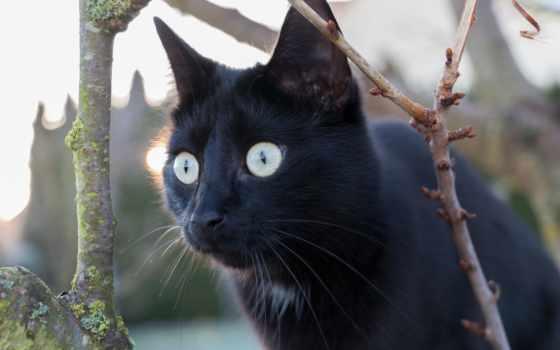 кот, свет, взгляд, red, смотрит,