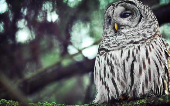 сова, glaza, клюв, перья, птица, ветви,