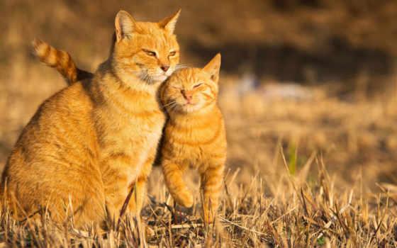 кот, котенок, summer, рыжая, картинка, animal,