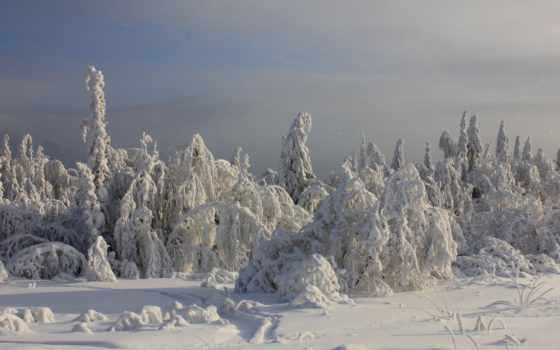 winter, деревья, снег