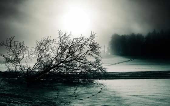 мрачно, туман, дерево