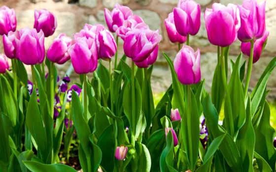 весна, природа, цветы