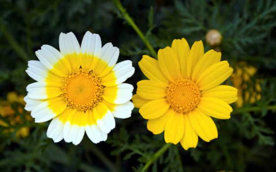 планом, крупным, цветы