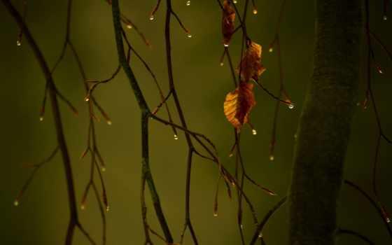 осень, макро, грустная, листва, branch, капли, природа, нояб,