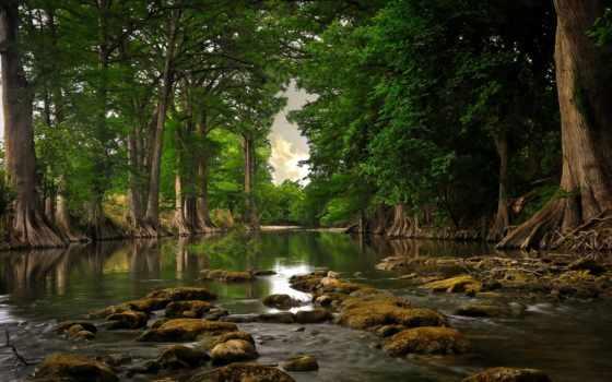 лес, природа, река, камни, trees, природы, глуш,