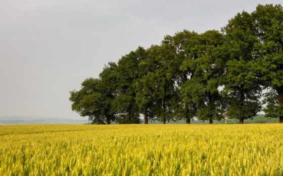 ферма, trees, поле, поля, пшеница, трава, landscapes, дерево, природа,