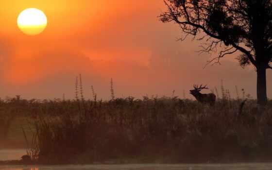 лань, animal, закат, лось, восход, plain, landscape, природа, туман, животные, фон