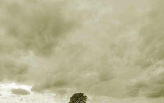 дерево, человек