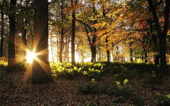 солнце, лучи, осень, деревья, лес, картинка, картинку, village, woodland, lancashire, abbey, пейзажи, england, gb, изображения,
