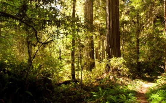 природа, usa, деревя