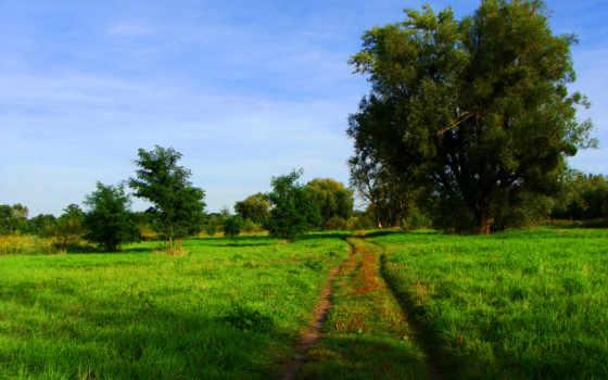 тропинка, природа, getbg, картинку, trees, дорога,