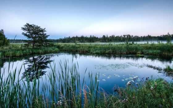 пруд, природа, lakes, озеро, fish,