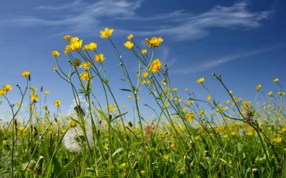 cvety, усть, роза, каменогорск, video, blue, yellow, youtube,