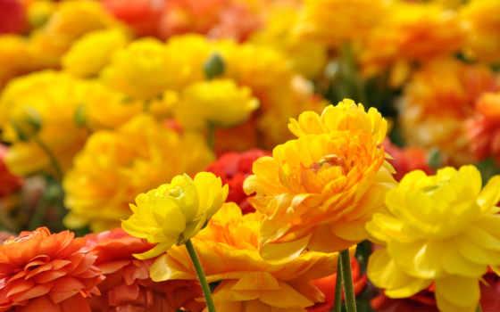 cvety, улыбка, создателя, цветов, истинно, нашего, какое, удивительное, палисадник, июл,