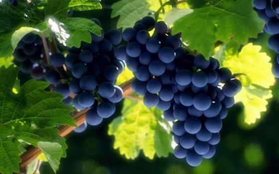 плоды, виноград, винограда, скопление, high, плод, pixels,