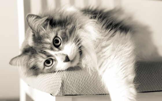 кошки, коты, кот, которые, котэ, expand, ложь, subscribe, животных, породы,