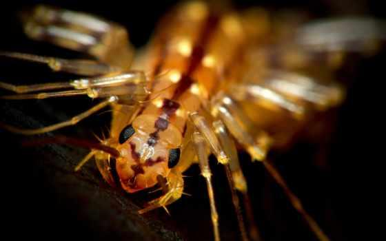 centipede, house, опубликовано