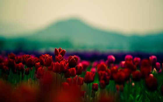 небо, flowers, red, шишки, collections, добавить, follow,