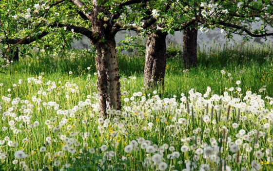 garden, flowers, white, цветы, more, trees, об, pinterest, wild,