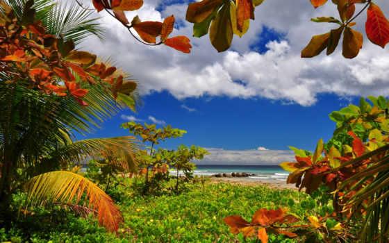 doğa, full, manzara, море, бриджтаун, природа, тегом, пляж,