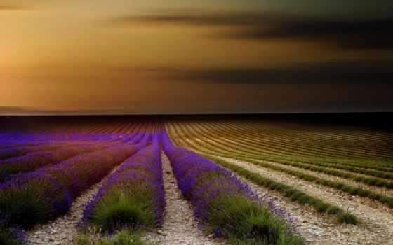 margin, лавандовые, лавандовых, цветения, полей, живописных, франции, истинно, french, ведь,