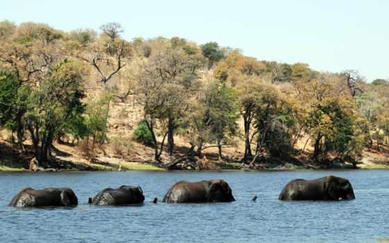 животные, animals, слоны