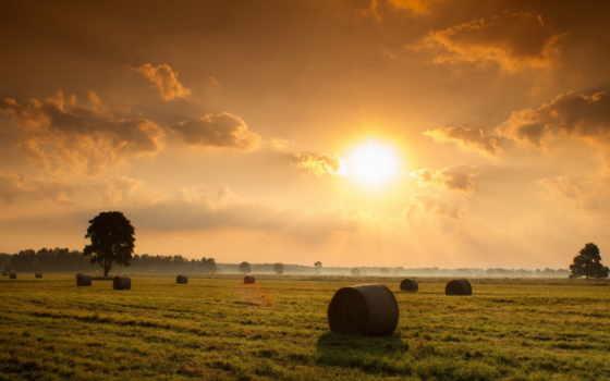 поле, закат, природа