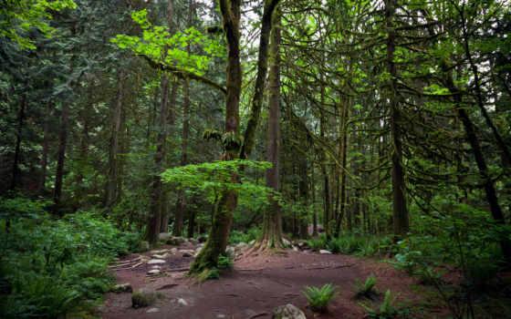 природа, лес, trees, поляна, among, разных, чаща, леса, хвойного, вольский,