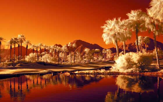 пальмы, оазис, горы, пустыня, water, озеро,