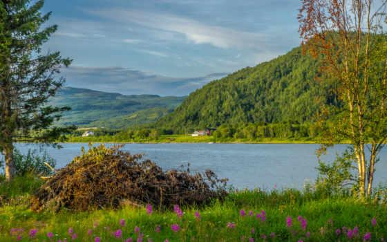 trees, дома, природа, cvety, admin, пейзажи -, норвегия, northern, сваи, трава,