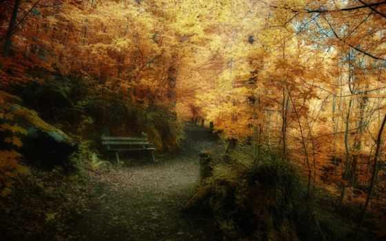 природа, осень, лес