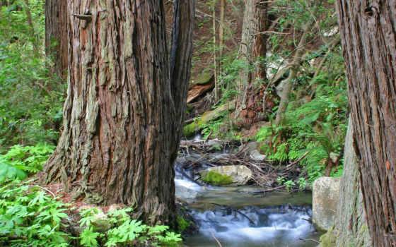 ручей, лес, trees, water, природа, дождя, после, стволы, осень, landscape, among,