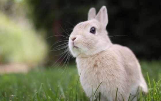 кролик, animal, game, газон