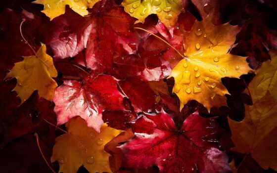 leaf, осень, water, листва, tat, pinterest, bild