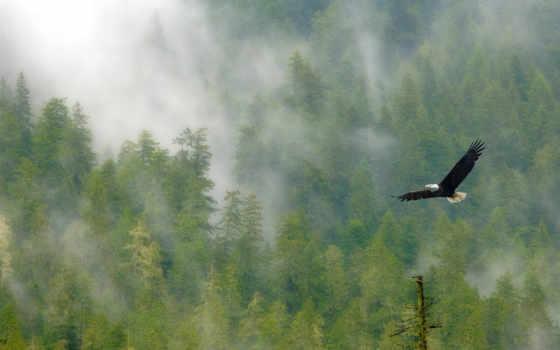 орленок, eagle