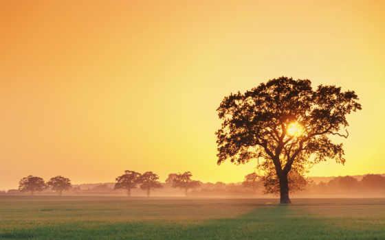 дерево, закат