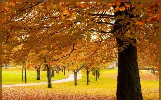 листва, preview, park